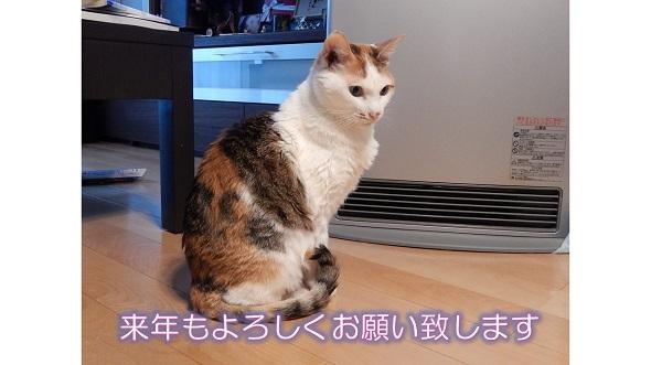 テンちゃん挨拶.jpg